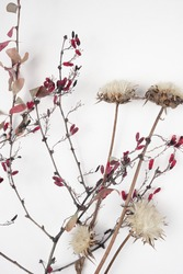Dried flowers and leaves on white background.Flowers composition. Copy space, flat lay , top view