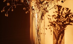 Dried flowers bouquet. Sunset shadow at home. Wildflowers decoration