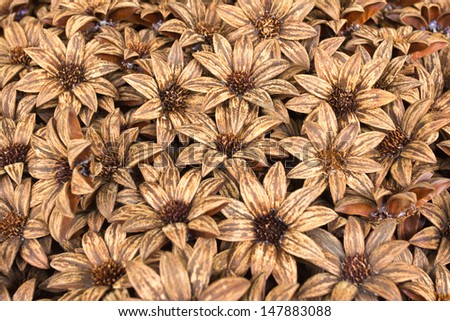 Dried flowers for decoration.