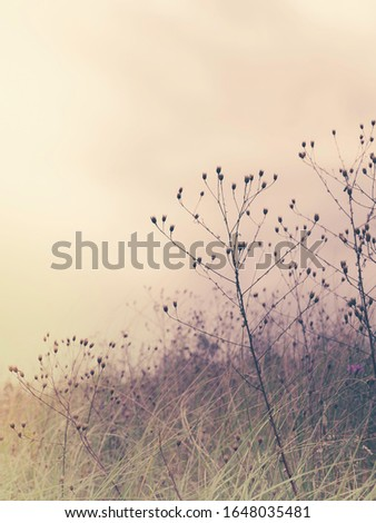 Dried flowers in a field - soft color desaturated photo stock photo