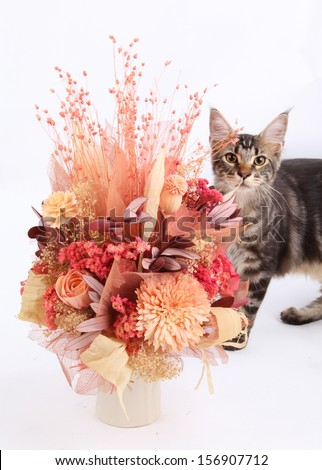 Dried flowers in a vase and cat on a white background