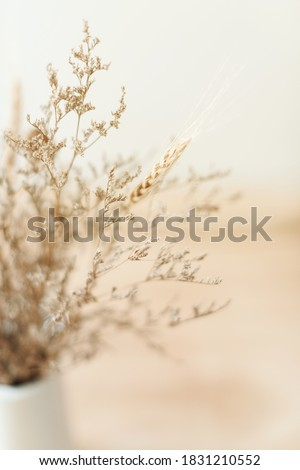 Dried flowers in the vase. kinfolk and minimalism style Foto stock ©