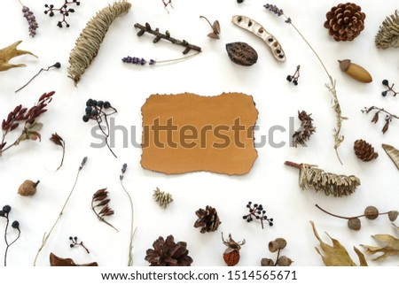 Dried flowers leaves and berries composition around ragged yellow sheet of paper . Beautiful autumn plant photo #1514565671