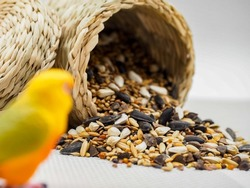 dried grains bird food, Black sunflower seeds are highly recommended for use in bird feeders because they attract a wide variety of birds, high ratio of meat to shell, and are high in fat content.
