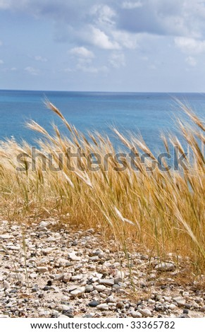 Dried grass with sea in the background