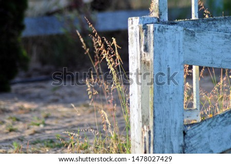 Dried grasses growing around a weathered fence #1478027429