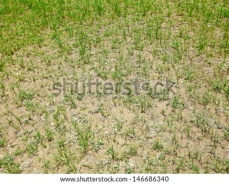 Dried lawn