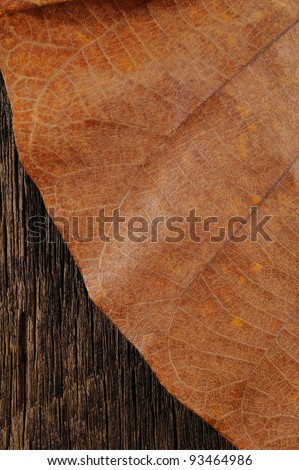 Dried leaf on wooden