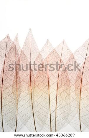 Dried Leaf skeleton background - stock photo