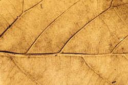 Dried leaf texture background.