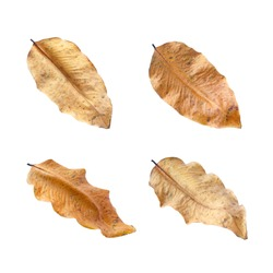 Dried leaves isolated on white background.