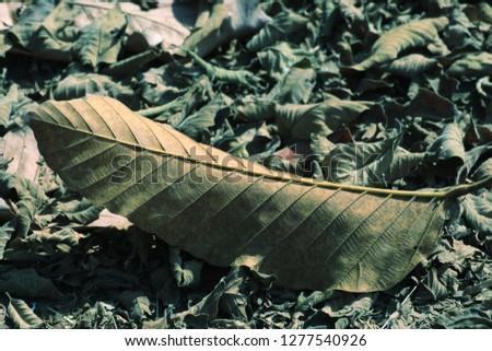 Dried leaves,leaves of leaves,very beautiful