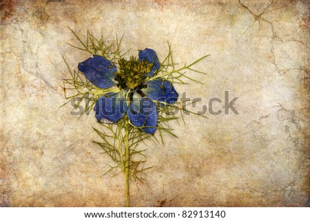 dried love-in-a-mist overlaid with a grunge texture - stock photo