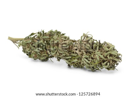Dried marijuana bud with visible THC on white background