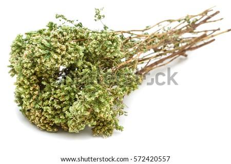 Dried Oregano on white background #572420557