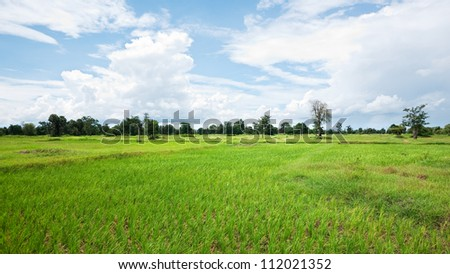 Dried out rice field in Banteay Meanchey Province, Cambodia #112021352