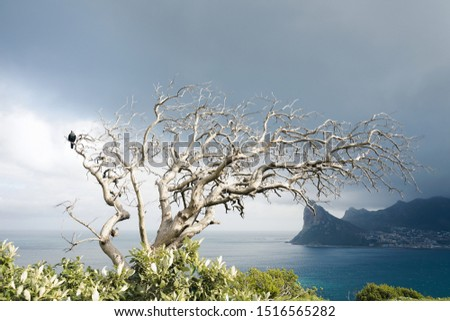 dried out tree without leaves with green bush in the foreground and sea, mountains and dark clouds in the background. A single bird. Mystic atmosphere in the picture. Detals: 6000x4000 350dpi