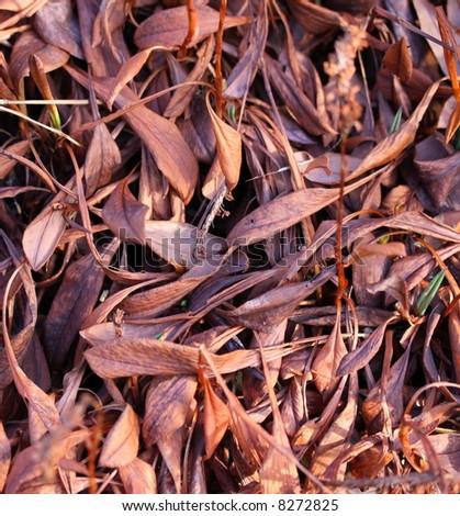 dried plant leaf background