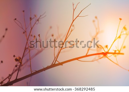 Dried plant on a background sunset. Shallow depth of field