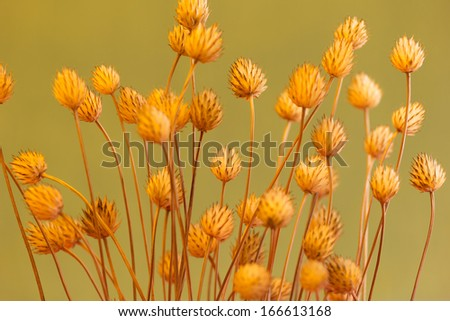 Dried plant on on the beautiful background
