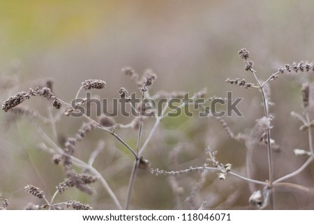Dried plants at sunset in middle of autumn - stock photo