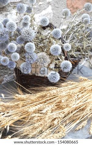 Dried plants for decoration, Flea market, Puertomingalvo village, Teruel, Aragon, Spain
