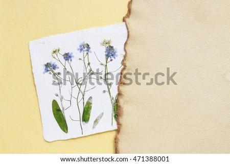 Dried pressed flowers on vintage paper background copy space ez dried pressed flowers on vintage paper background copy space mightylinksfo