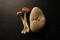 Dried Psilocybe Cubensis Psilocybin Mushrooms on black background, flat lay. Magic shrooms Golden Teacher. Psychedelic inspiration. Natural herbal therapy. Spiritual experience.