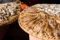 Dried Raw Salted Fish in a Tray, Row of Dried fishs Under The Sun