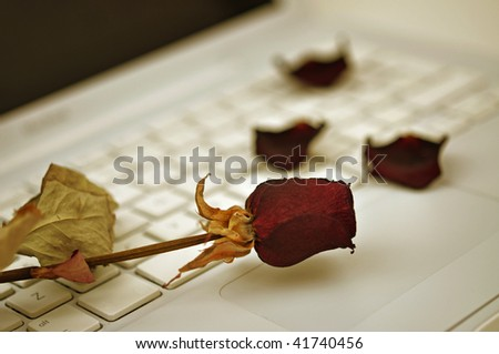 Dried red rose and petals on a white computer