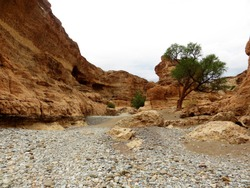 Dried river bed with a tree