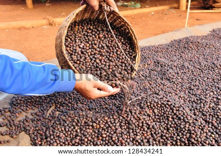 dried robusta coffee beans were poured from the basket