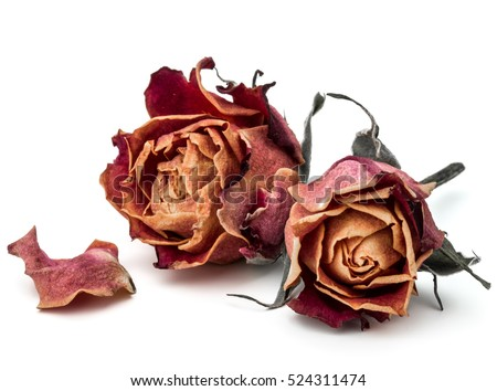 Stock Photo dried rose flower head isolated on white background cutout