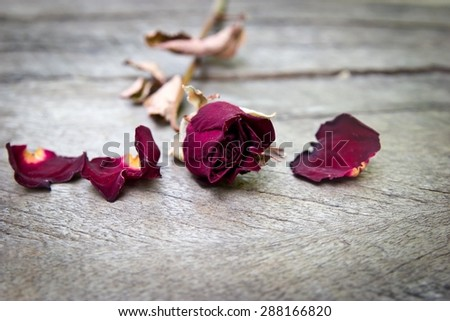 Dried rose flower on wood background.