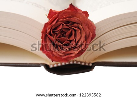 dried rose on opened book
