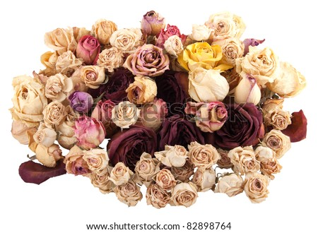 Dried roses isolated on white background