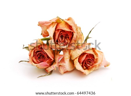 Dried roses stacking on white
