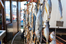 Dried sea fish hanging on hooks at a local fish market.