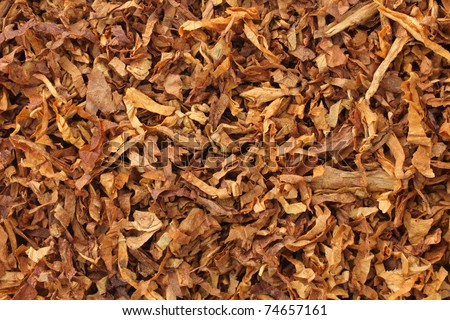 dried smoking tobacco leaves close-up macro view