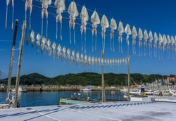 Dried squid hanging on string at Yobuko Port located on the Higashi Matsuura Peninsula in the northwestern part of karatsu. traditional in morning market at Yobuko, Saga, Karatsu, Kyushu, Japan