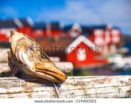 dried stockfish, in norwegian village, Lofoten, Norway