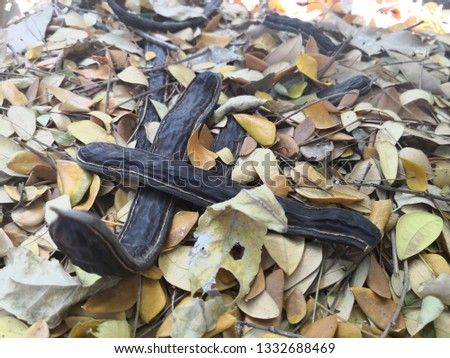 Dried tamarind on dried leaves