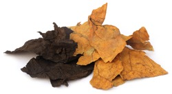 Dried tobacco leaves over white background