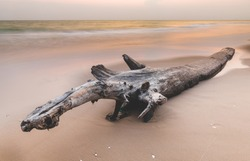 Dried tree log on the beach with outdoor low sunset lighting.