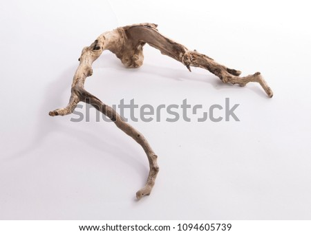 Dried tree snag - Shutterstock ID 1094605739