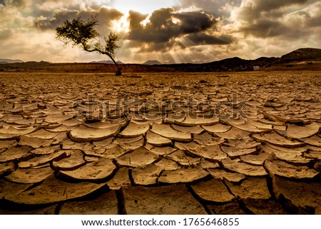 Dried up base of a dam in Ras al khaimah, one tree stands tall. Concept shot for scarcity, famine Сток-фото ©