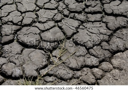 Dried up river bed with the cracked earth and mud