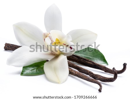 Dried vanilla sticks and orchid vanilla flower isolated on white background. Foto d'archivio ©