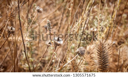dried vegetation on the shore #1305571675