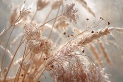 dried wild carrot flowers together with dried grass and spikelets beige on a blurred background